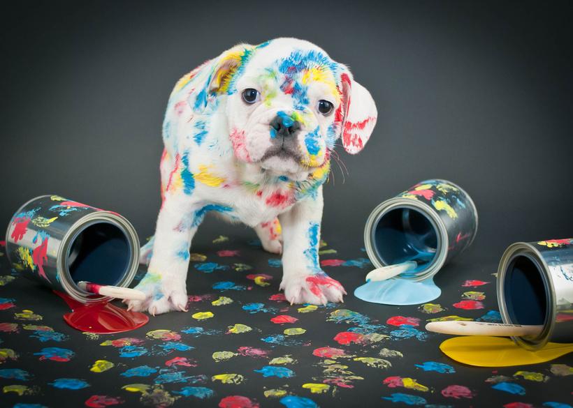 Diluant peinture polyester for Peinture piscine polyester
