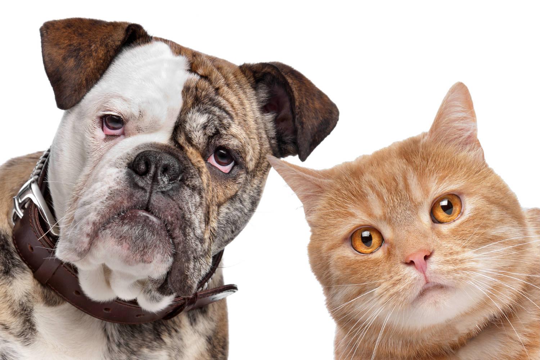 repulsif efficace pour chat chien souris et autres animaux. Black Bedroom Furniture Sets. Home Design Ideas